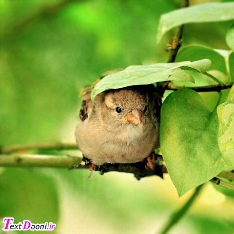پرنده ای که روی یک شاخهی درخت نشسته هرگز نمی ترسد که شاخه بشکند، چون به بالهای خودش اطمینان دارد، نه به شاخهی درخت
