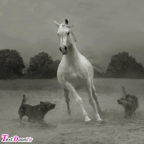 اسب ها ،