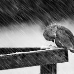 پرنده ای برای نوشیدن اب بسمت