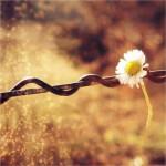 ميتوان زيبا زيست ... نه چنان سخت که از عاطفه دلگيرشويم ،
