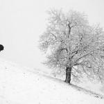 برف میبارد...