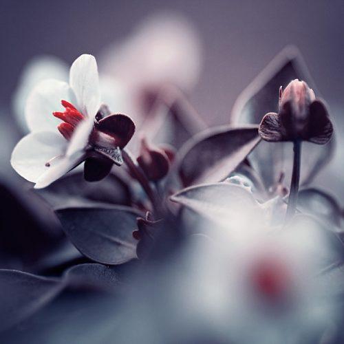 فریب معرفت باغبان مخور ای گل