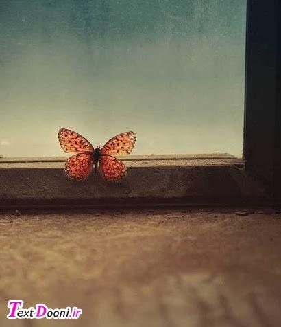هرچه فکر میکنم اما یک پروانه